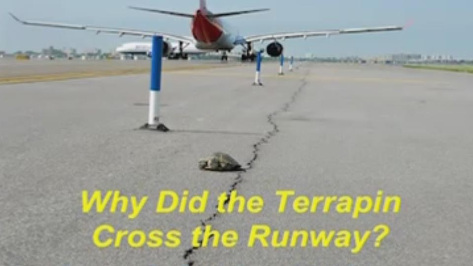 Why Did the Terrapin Cross the Runway?